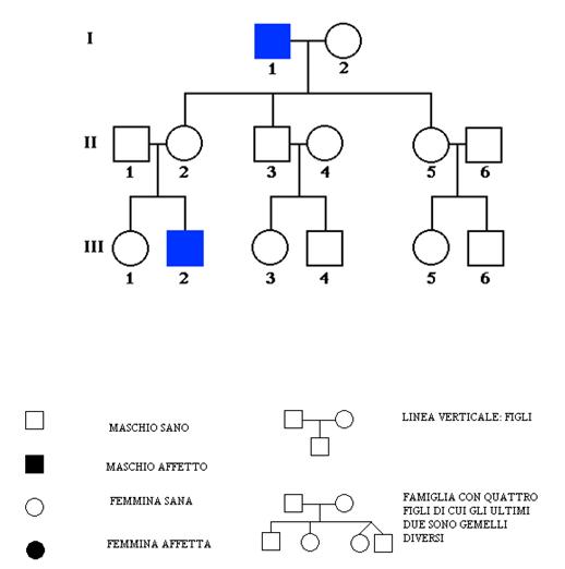 Populaire Lo studio dell'albero genealogico VA44